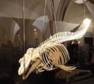 Museum für Naturgeschichte